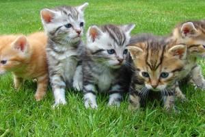 chat-celibataires-celibest