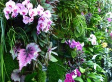terra-botanica-celibest-angers