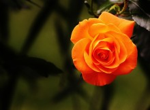 jardin-botanique-bayonne-celibest